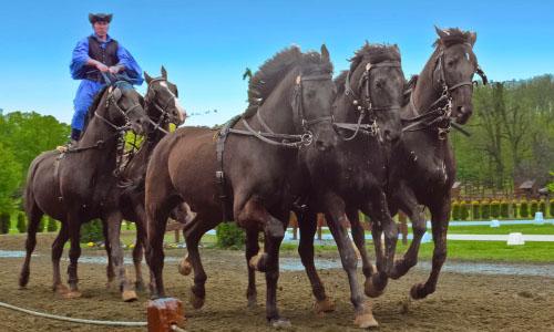 Equitation hongroise