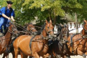 Chateau de Sissi + Ferme Equestre